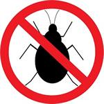 No Bugs